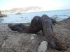 "Object ""La Grande Bouffe"", Driftwood Hunting"